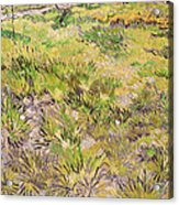 Meadow With Butterflies Acrylic Print by Vincent Van Gogh