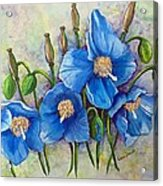 Meconopsis    Himalayan Blue Poppy Acrylic Print by Karin  Dawn Kelshall- Best