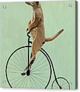 Meerkat On A Black Penny Farthing Acrylic Print by Kelly McLaughlan