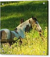 Meet Me At The Fence Acrylic Print by Feva  Fotos