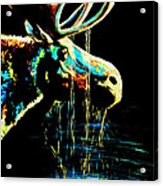 Midnight Moose Drool  Acrylic Print by Teshia Art