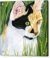Millie The Adventurer Acrylic Print by Sarah Dowson