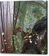 Misty Woods Acrylic Print by Thomas R Fletcher