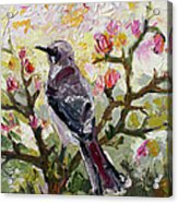 Mockingbird By My Window Acrylic Print by Ginette Callaway