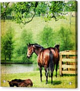 Mom And Foal Acrylic Print by Darren Fisher