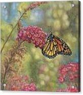 Monarch Butterfly Acrylic Print by John Zaccheo
