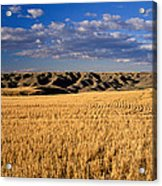 Montana   Field And Hills Acrylic Print by Anonymous