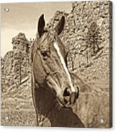 Montana Horse Portrait In Sepia Acrylic Print by Jennie Marie Schell