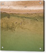Montrose Beach Dog Park Acrylic Print by Adam Romanowicz
