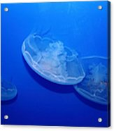 Moon Jelly Fish 5d24936 Acrylic Print by Wingsdomain Art and Photography