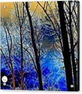 Moonlit Frosty Limbs Acrylic Print by Will Borden