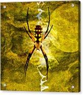Moonlit Web Acrylic Print by J Larry Walker