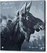 Moose Sketch Acrylic Print by Aaron Blaise