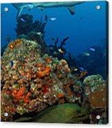 Moray Reef Acrylic Print by Carey Chen