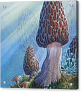 Morel Mushrooms Acrylic Print by Mike Stinnett