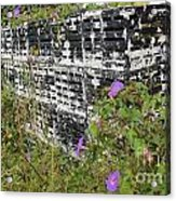 Morning Glories And Crab Traps Acrylic Print by Theresa Willingham