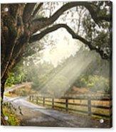 Morning Light Acrylic Print by Debra and Dave Vanderlaan