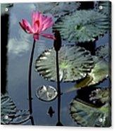 Morning Light Acrylic Print by Karen Wiles