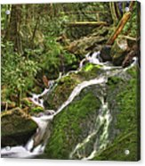Mossy Creek Acrylic Print by Debra and Dave Vanderlaan