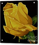 Mother's Yellow Rose Acrylic Print by Cory Still