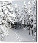 Mount Osceola Trail - White Mountains New Hampshire Acrylic Print by Erin Paul Donovan