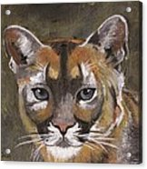 Mountain Cat Acrylic Print by Jamie Frier