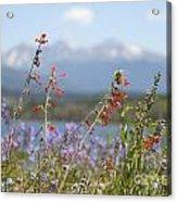 Mountain Wildflowers Acrylic Print by Juli Scalzi