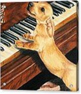 Mozart's Apprentice Acrylic Print by Barbara Keith