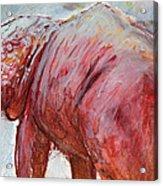 Mrbigpig Acrylic Print by Ethan Harris