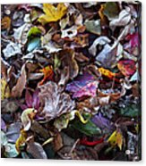 Multicolored Autumn Leaves Acrylic Print by Rona Black