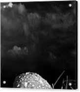 Mushroom Acrylic Print by Bob Orsillo