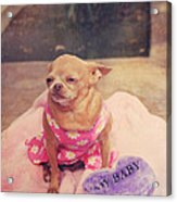 My Baby Acrylic Print by Laurie Search