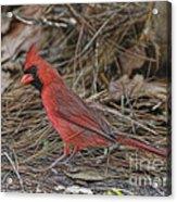 My Name Is Red Acrylic Print by Deborah Benoit