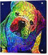 My Psychedelic Bulldog Acrylic Print by Jane Schnetlage