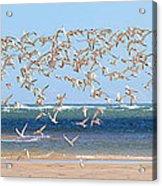 My Tern Acrylic Print by Bill Wakeley