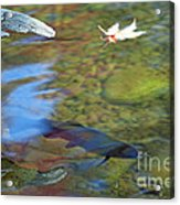 Mystic Waters Acrylic Print by James Lady