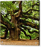 Mystical Angel Oak Tree Acrylic Print by Louis Dallara