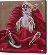 Nap Hard Acrylic Print by Barbara Keith