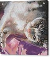 Nap Time For Kitty Acrylic Print by Janice Harris