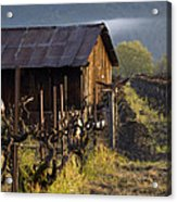 Napa Morning Acrylic Print by Bill Gallagher