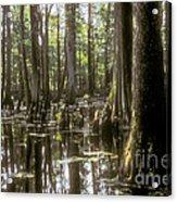 Natchez Trace Wetlands Acrylic Print by Bob Phillips
