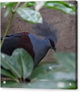 National Zoo - Birds - 011329 Acrylic Print by DC Photographer