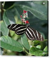 National Zoo - Butterfly - 12121 Acrylic Print by DC Photographer