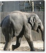 National Zoo - Elephant - 12126 Acrylic Print by DC Photographer