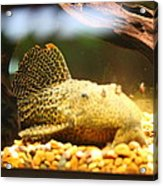 National Zoo - Fish - 011311 Acrylic Print by DC Photographer