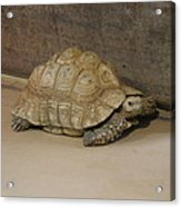 National Zoo - Turtle - 12121 Acrylic Print by DC Photographer