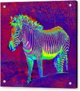 Neon Zebra Acrylic Print by Jane Schnetlage