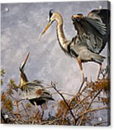 Nesting Time Acrylic Print by Debra and Dave Vanderlaan