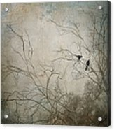 Nevermore... Acrylic Print by Amy Weiss