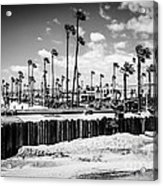 Newport Beach Dory Fishing Fleet Black And White Picture Acrylic Print by Paul Velgos